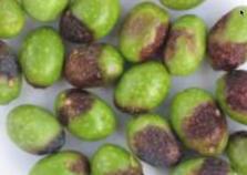 L 39 oliveraie du coudon maladie - Maladie de l olivier en pot ...