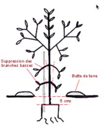 L\'OLIVERAIE DU COUDON - Plantation